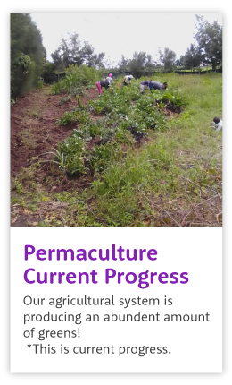 Permaculture progress at Agatha Amani House